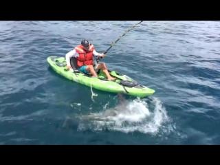 Адреналин зашкаливает! Экстремальная ловля акулы в море с лодки-байдарки! О_о