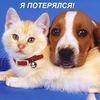 Пропавшие и найденные животные г.Петрозаводска