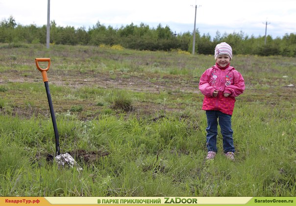 посадка сосен на Кумысной поляне