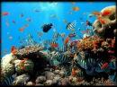 Красное море, Египет, Шарм эль шейх (2014)