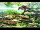 2015 AGA aquascaping contest best aquariums (all) HD