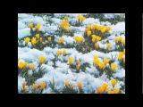Ф. Шопен - Весенний вальс. Ричард Клайдерман.