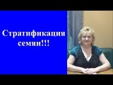 Все о СТРАТИФИКАЦИИ СЕМЯН!!!