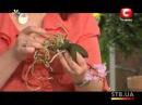 Секреты ухода за орхидеями - Все буде добре - Выпуск 148 - 14.03.2013 - Все будет хорошо