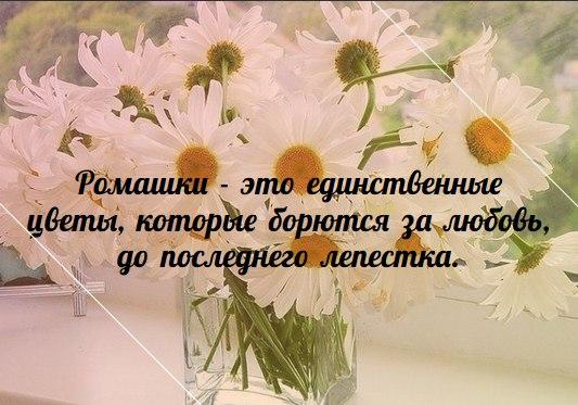 http://cs627318.vk.me/v627318275/138c4/kc1kh9peFS0.jpg