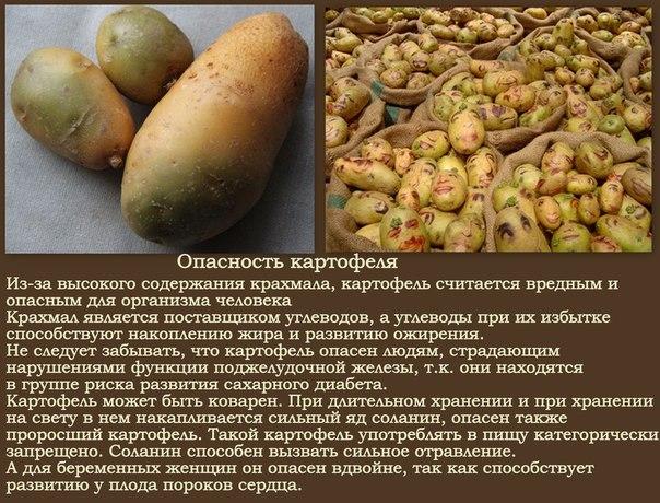 Почему беременным нельзя картошку 52