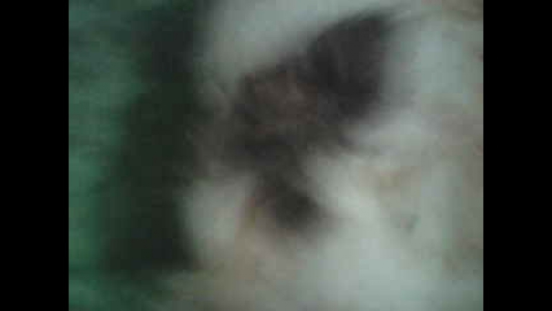 Морская Свинка Курит Прикол H;frf