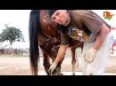 Натуральная расчиска копыт лошадей. Алексей Берков, Кипр 2014