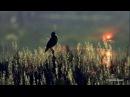 Stive Morgan - Magic World Of Illusions[HD]