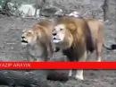 знамения Животные говорят Аллаh