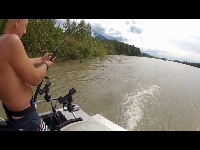 Ловля Осетра 2 метра 71см 180 кг см fraser river канада