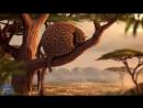 Короткометражный Мультфильм | Надутые звери