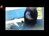 Wipeout 2013 American Show Maxim Novitskiy Максим Новицкий
