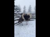 в гостях на страусинном хуторе1