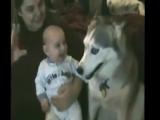 Приколы с животными и детьми
