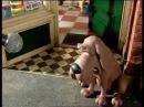 В мире животных В зоомагазине.