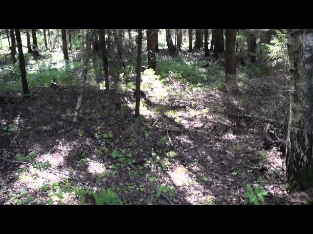 Mushroom Boletus edulis found in the forest in Russia