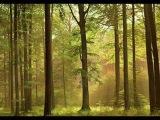Dan Gibson - A Path to Solitude