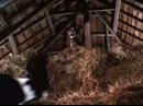 «Скотный двор» 1999 Трейлер