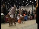 22.11.2015 Монопородная выставка Венгерская легавая выжла