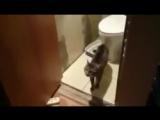 Кот охранник туалета