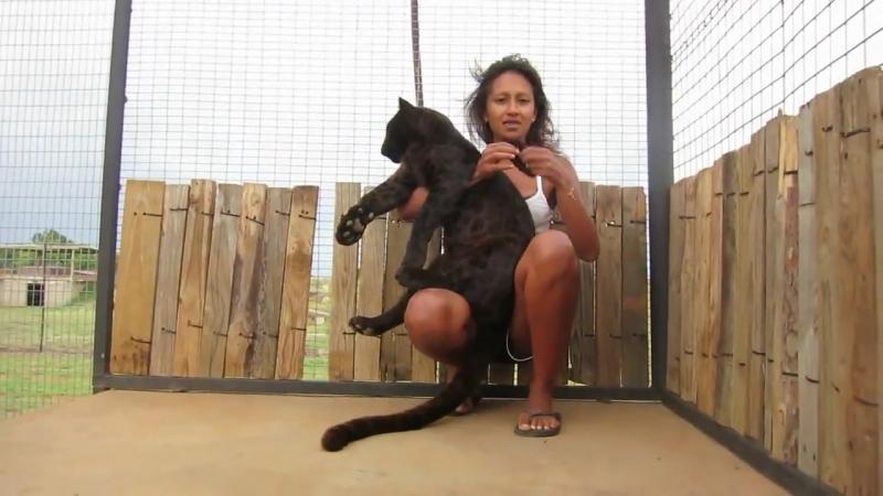 TWFE - Реакция чёрной пантеры, когда она видит своего любимого смотрителя в зоопарке.