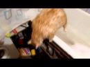 Жирный кот застрял в ванной
