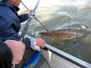 Рыбалка на сома, Дунай