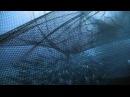 Королевство океанов 2011 2_4