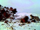 Снежный барс - Ирбис