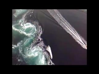Самый мощный водоворот в мире
