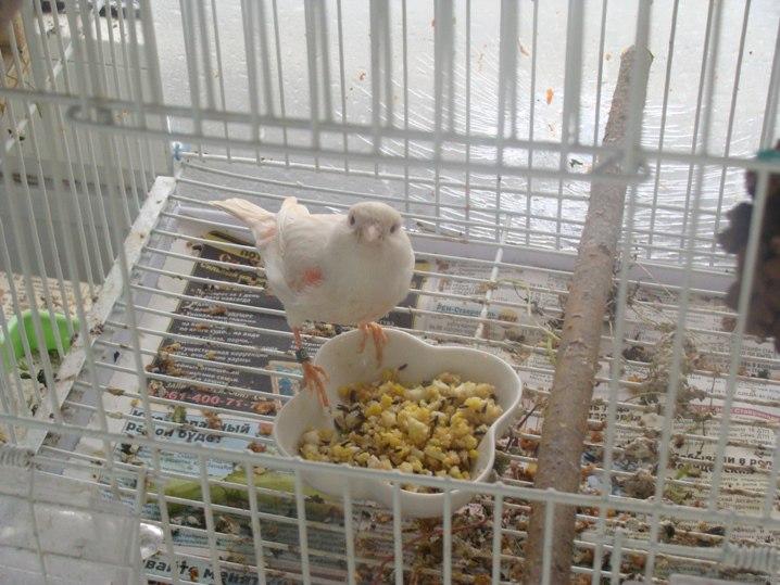 Кормление птиц - Страница 2 SsNmlFfLAW8