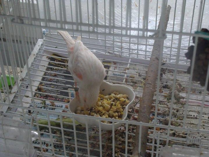 Кормление птиц - Страница 2 35rsgNbtCM4