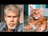 Кошки, похожие на знаменитостей