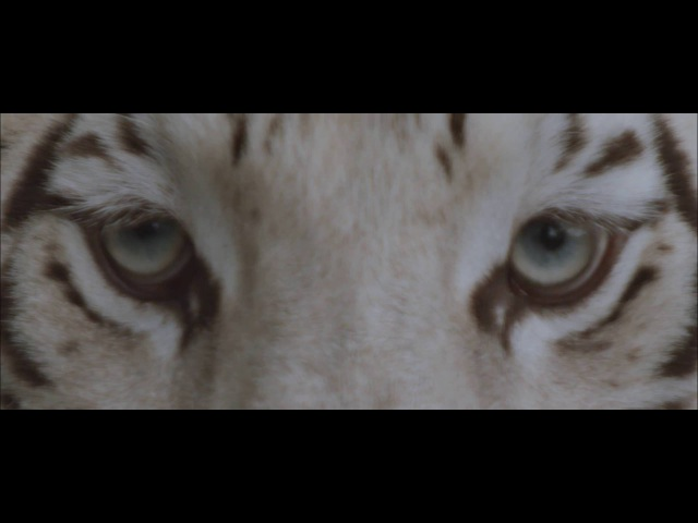 Our Last Night - White Tiger (OFFICIAL)