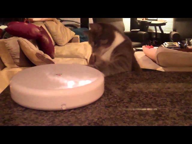 Smarthome - Frolicat FK1 FLIK Cat Teaser