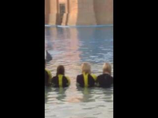 Люди и Дельфины вместе.Дубай