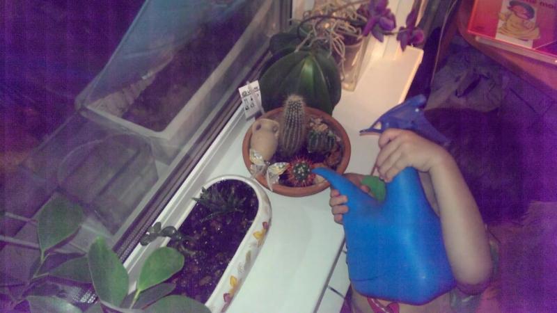 Niki arrose les plantes