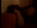 мой котэ :3