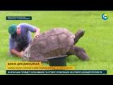 Самую старую черепаху в мире помыли впервые за 184 года