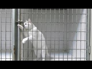 Этот кот — мастер побега