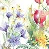 * РЕДКАЯ ПТИЦА * система цветотипов