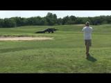 Гигантский аллигатор во Флориде