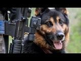 Боевые псы войны. Собаки на службе в армии.