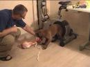 Дрессировка собак, как научить щенка отдавать кость и не кусаться