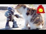 Реакция котов и псов на радиоуправляемые машины. Смешная реакция животных