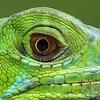 Мир Зооэкзотики-Смоленск-Змеи-Пауки-Ящерки