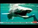 Доисторическая плащеносная акула 25 января 2007 года
