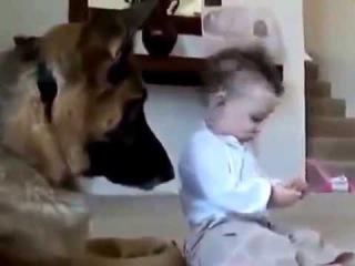 Бедные собаки и смешные дети Смешное видео с детьми прикол 2015 1
