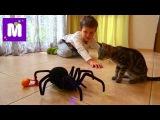 Паук Чёрная вдова распаковка игрушки на Радио управлении Black Widow Spider unpacking RC toy